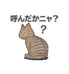 全12種 話すねこのスタンプ/きじとら猫(個別スタンプ:03)