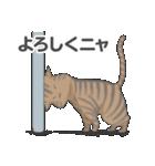 全12種 話すねこのスタンプ/きじとら猫(個別スタンプ:08)