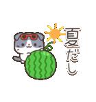 はちわれスコちゃん(個別スタンプ:11)