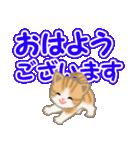 ちび猫 でか文字敬語(個別スタンプ:1)