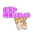 ちび猫 でか文字敬語(個別スタンプ:31)