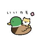 ゆる柴犬スタンプ13・ダジャレ(個別スタンプ:20)