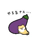 ゆる柴犬スタンプ13・ダジャレ(個別スタンプ:24)