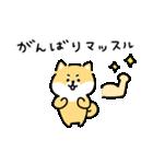 ゆる柴犬スタンプ13・ダジャレ(個別スタンプ:25)