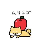 ゆる柴犬スタンプ13・ダジャレ(個別スタンプ:35)