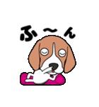 超元気なビーグル犬(個別スタンプ:3)