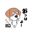 超元気なビーグル犬(個別スタンプ:10)
