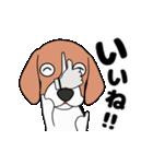 超元気なビーグル犬(個別スタンプ:14)