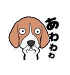 超元気なビーグル犬(個別スタンプ:19)