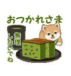 よちよち豆柴 優しい冬(個別スタンプ:11)