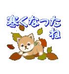 よちよち豆柴 優しい冬(個別スタンプ:17)