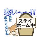 よちよち豆柴 優しい冬(個別スタンプ:19)
