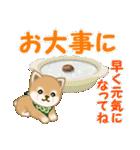 よちよち豆柴 優しい冬(個別スタンプ:27)