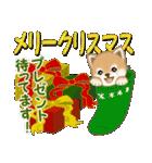 よちよち豆柴 優しい冬(個別スタンプ:35)
