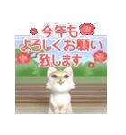 飛び出す 縁側の猫【お正月】(個別スタンプ:8)