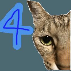 グラビューハート04*保護猫応援*