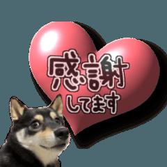 柴犬じゃない♡ ぎんの使えるスタンプ3
