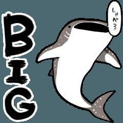 【BIG】しゃべるジンベエザメ