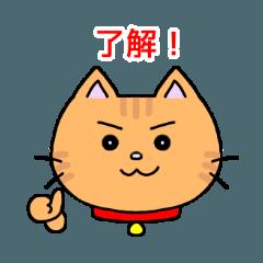 基本のトラ猫 赤