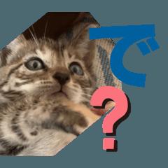 子猫のツッコミスタンプ