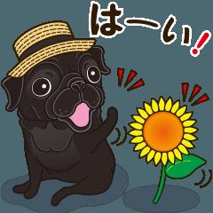 気軽に黒パグ 夏季編