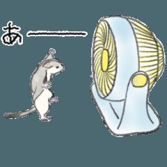 フクロモモンガのジオ 夏
