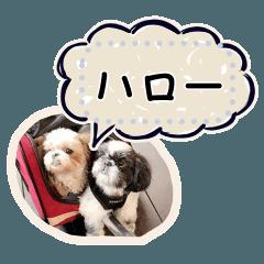ルーちゃん&ペーちゃんの写真のメッセージ