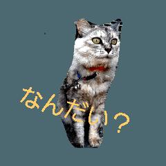 猫  花火 猫zou