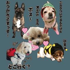 kawaiiわんちゃん's