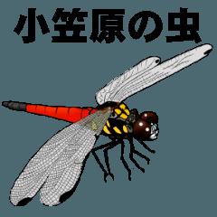 [LINEスタンプ] 小笠原の虫