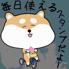 [LINEスタンプ] 柴犬の動く!極日常スタンプ