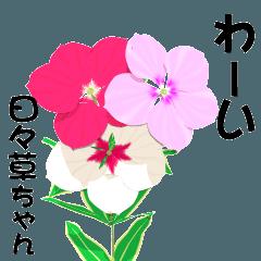 3D!動くお花!毎日花咲く日々草ちゃん