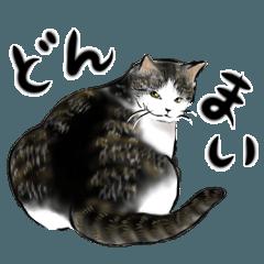クールな猫のご挨拶