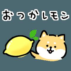 [LINEスタンプ] ゆる柴犬スタンプ13・ダジャレ (1)