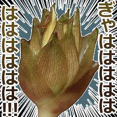 [LINEスタンプ] ミョウガ
