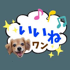 うちの子シリーズ『犬のアミちゃん』