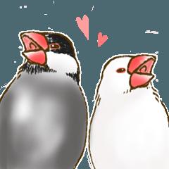 日常に添える文鳥