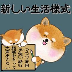 [LINEスタンプ] まる柴犬っちの「新しい冬生活」スタンプ