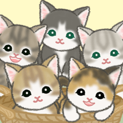 [LINEスタンプ] もこもこ猫ちゃんズ 毎日使う言葉