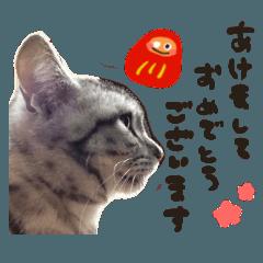 [LINEスタンプ] 全ての猫好きにおくるお正月&クリスマス