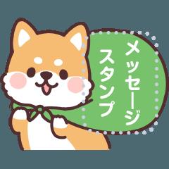 [LINEスタンプ] ころころ柴犬 メッセージ!