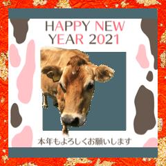 [LINEスタンプ] 新年あけおめスタンプ